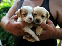Orphan dogs in the countryside of Romania Royalty Free Stock Photos