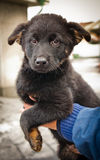 Orphan puppy in a dog pound. Waits for his new owner, sadly and hopefully Stock Images