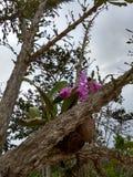 orquÃdea storczykowy kwiat Zdjęcie Stock