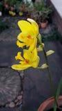 Orquídea à terra bonita Imagem de Stock