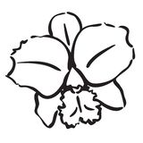 Orquídea Foto de Stock Royalty Free