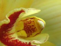 Orquídea? imagen de archivo