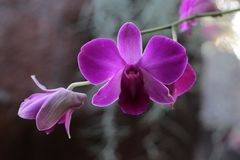 Orquídea Imagenes de archivo
