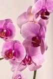Orquídea 2 Foto de archivo libre de regalías