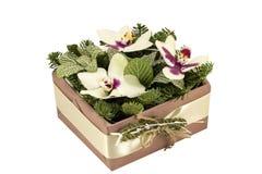 Orquídea Fotos de Stock Royalty Free