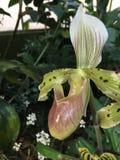 Orquídea Imágenes de archivo libres de regalías