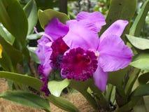 Orquídea foto de archivo