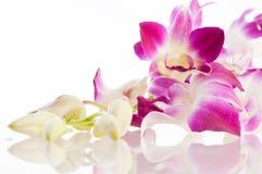 Orquídea. Aislamiento Fotografía de archivo libre de regalías