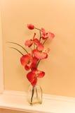 Orquídea alaranjada imagens de stock royalty free
