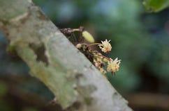 Orquídea amarilla Imagenes de archivo
