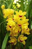 Orquídea amarilla en el jardín Imagenes de archivo