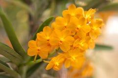 Orquídea anaranjada fotos de archivo libres de regalías