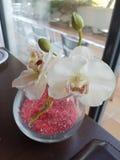 Orquídea artificial fotos de stock