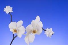 Orquídea blanca con la decoración. Foto de archivo libre de regalías