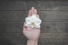 Orquídea blanca en una mano imagen de archivo libre de regalías