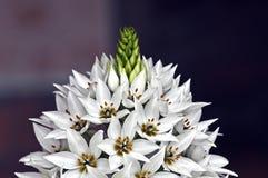 Orquídea blanca hermosa Foto de archivo libre de regalías