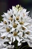 Orquídea blanca hermosa Imagen de archivo