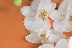 Orquídea blanca macra en la tabla anaranjada foto de archivo