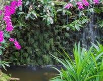 Orquídea blanca y púrpura cerca de la cascada Imágenes de archivo libres de regalías