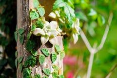Orquídea bonita foto de stock royalty free