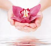 Orquídea bonita nas palmas do mercado de câmbios Imagem de Stock
