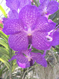 Orquídea bonita no fundo verde fotografia de stock