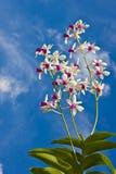 Orquídea branca fotografia de stock