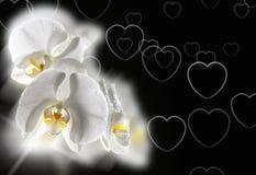 Orquídea branca Fotos de Stock