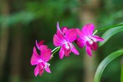 Orquídea branca bonita Imagens de Stock Royalty Free