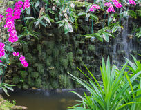 Orquídea branca e roxa perto da cachoeira Imagens de Stock Royalty Free