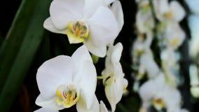 Orquídea branca em um fundo borrado vídeos de arquivo