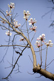 Orquídea china hermosa hermosa del jade imagen de archivo libre de regalías