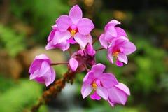 Orquídea colorida en Tailandia Foto de archivo libre de regalías