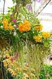 Orquídea colorida en Tailandia Imágenes de archivo libres de regalías