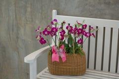 orquídea com cadeira do fundo Imagem de Stock Royalty Free