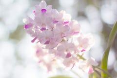 orquídea com cadeira do fundo Foto de Stock Royalty Free