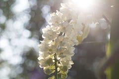 orquídea com cadeira do fundo Imagem de Stock