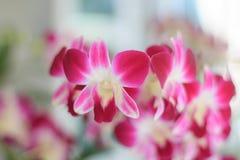 orquídea com garrafa do fundo Fotos de Stock