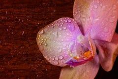 Orquídea com gotas em uma superfície de madeira Imagens de Stock Royalty Free