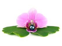 Orquídea com pérola de Tahiti Foto de Stock