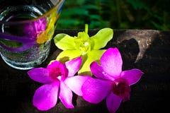Orquídea con la bebida fresca Fotografía de archivo libre de regalías