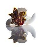Orquídea con la cáscara de huevo Foto de archivo libre de regalías