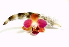 Orquídea con la pluma Imágenes de archivo libres de regalías