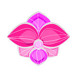 Orquídea cor-de-rosa e violeta imagens de stock royalty free