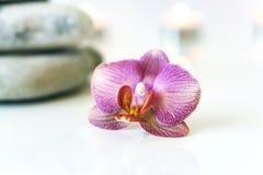 Orquídea cor-de-rosa fresca, perto das pedras cinzentas em um fundo branco E Fotos de Stock