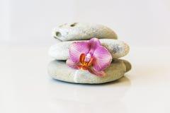Orquídea cor-de-rosa fresca, perto das pedras cinzentas em um fundo branco E Fotos de Stock Royalty Free