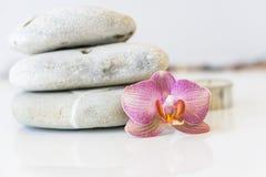 Orquídea cor-de-rosa fresca perto das pedras cinzentas em um fundo branco E Imagem de Stock Royalty Free