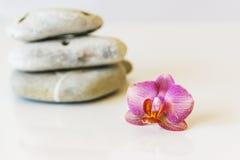 Orquídea cor-de-rosa fresca próximo, pedras cinzentas em um fundo branco E Fotografia de Stock