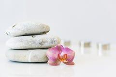 Orquídea cor-de-rosa fresca próximo, pedras cinzentas em um fundo branco E Imagem de Stock Royalty Free