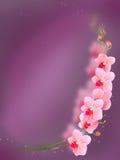 Orquídea cor-de-rosa isolada em um vermelho Fotografia de Stock Royalty Free